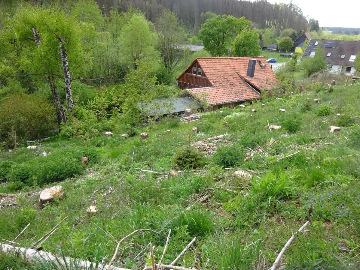 waldhaus009